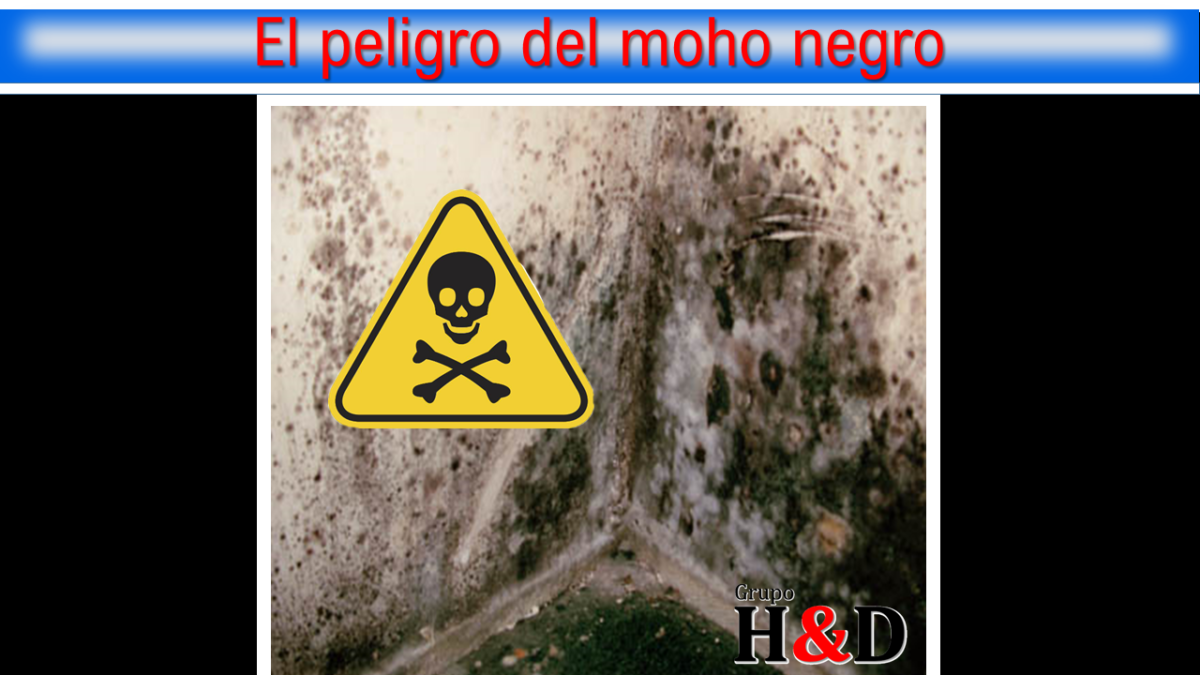 El peligro del moho negro